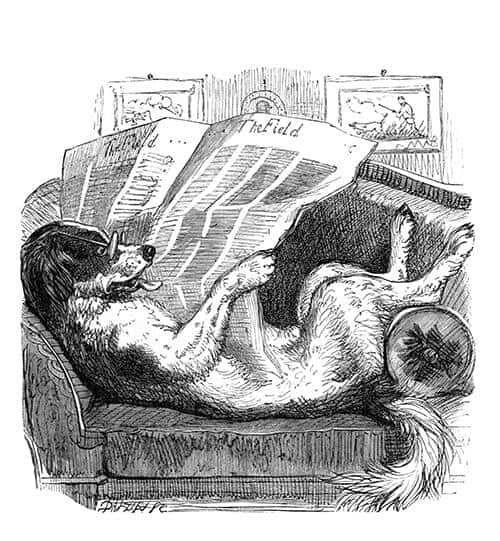 Dog reading the newspaper.